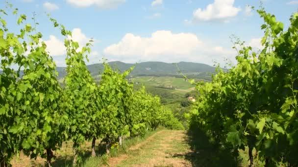zelená vinice v Toskánsku. Regionu Chianti v Itálii. 4 k Ultra Hd videa.