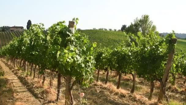 Krásné vinice v regionu Chianti poblíž vesnice Quarate (Florencie) během letní sezóny v Toskánsku, Italy.4k Uhd Video Nikon D500