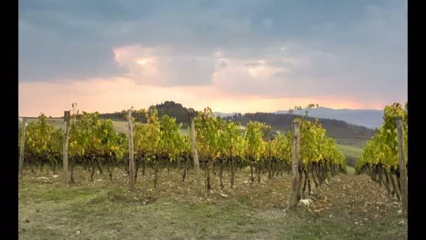 Žlutá vinic v regionu Chianti s dramatickým zamračená obloha. Toskánsko. Timelapse