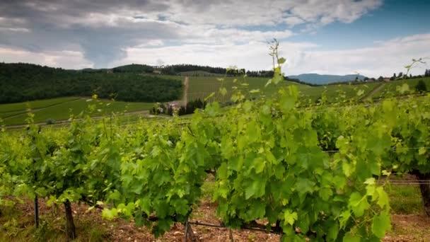 Bewölkter Himmel zieht über die wunderschönen grünen Weinberge in der Chianti-Region in der Nähe von Florenz in der Toskana. Timelapse.Tilt Kamerafahrt.