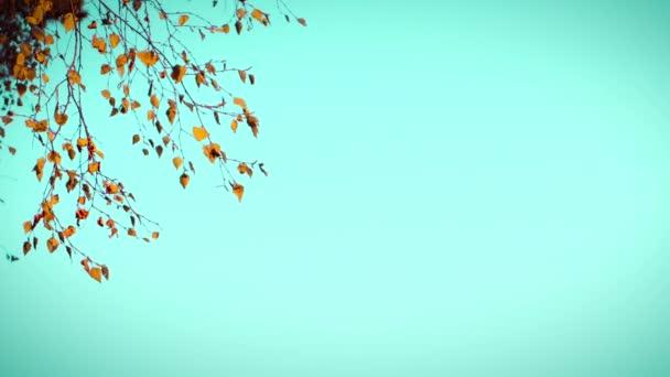 4 k. větev s podzimní listy se pohybuje pomalu, fouká vítr. Orange a zelenomodrá barva styl