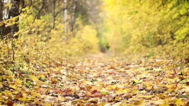 Az őszi út. Sárga levelek lassan hullanak a fákról. Lassított felvétel.