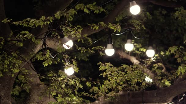A garland of light bulbs on a tree in the evening  Romantic setting   Fireflies fly around light bulbs at night