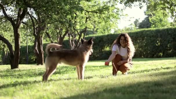 Egy fiatal gyönyörű göndör nő játszik kutyájával a parkban a nyári napon