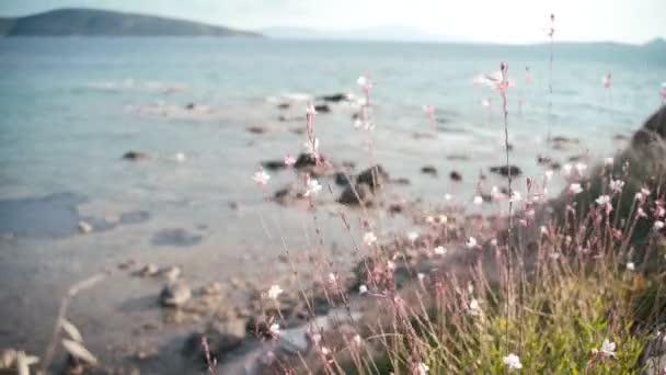 Divoké květy houpat od větru na moři, přírodní detaily a krásná krajina