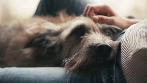 Egy közeli kép egy kutyaarcról, ami furcsán néz ki.