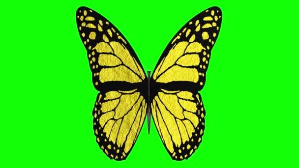 Videa. 3D ilustrace. Barevný motýl s otevřenými křídly na pozadí klíče Chroma.