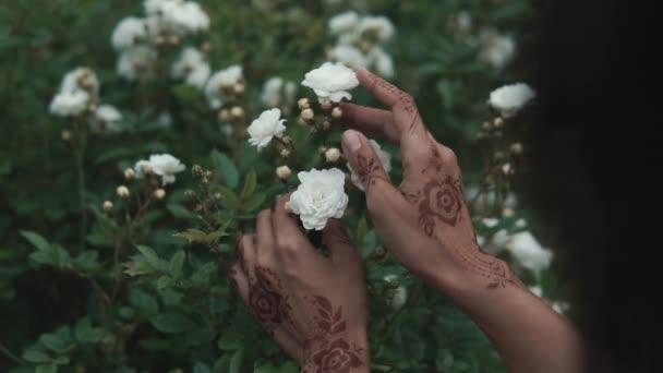 zblízka střílel Zenske rukou dotýká růže, ona má mehendi na prstech