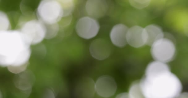 Zelená bokeh rozostřila abstraktní pozadí, listí se houpá ve větru. Bokeh světlá 4k