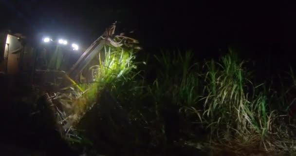 Cukornád hasmellény ültetvény éjszaka