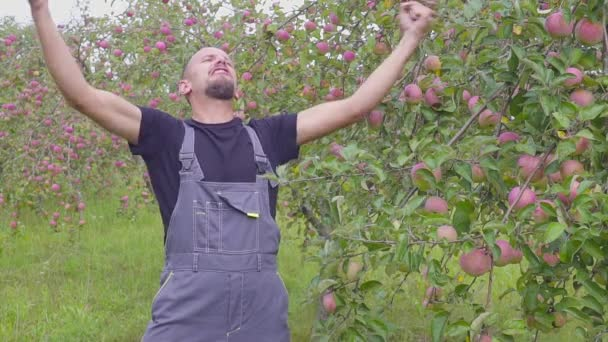 Slow motion shooting of a funny dancing and jumping farmer in the apple orchard. happy successful farmer near the orchard with an excellent harvest of apples
