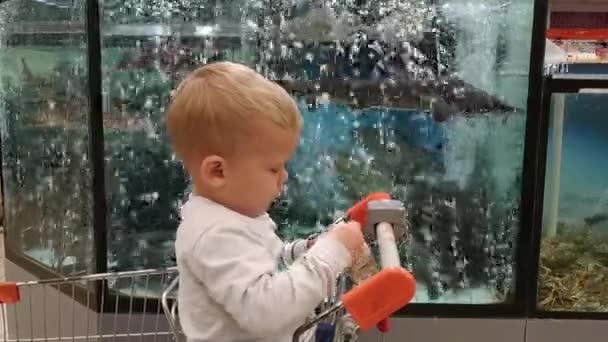 little boy looks at the fish in the aquarium in the supermarket