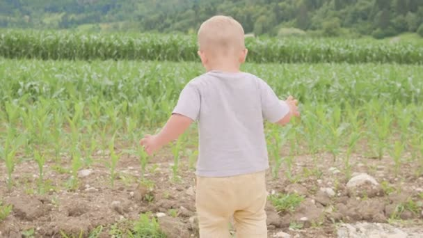 Small boy child standing and running among green grass field of corn or maize sunny day outdoor on natural blue sky and mountain background.