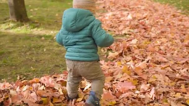 kisfiú, figyelembe véve az első lépéseket a parkban. őszi nap.