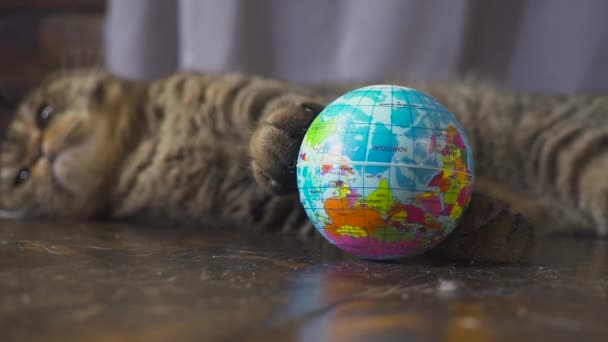 The cat is playing with a globe. Concept on the world in your hand. slow motion