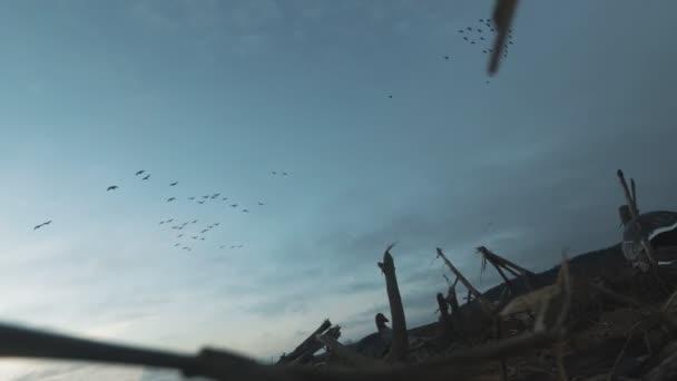 Sziluettje egy állomány a vadon élő libák. A nyáj madarak repül el a gyönyörű naplemente