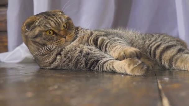 Kočka si hraje s obrázkem zeměkoule. Koncepce na světě v ruce. Zpomalený pohyb