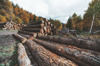 Wide-angle view of a logging camp on the countryside in an autumn forest with heaps of recently cut tree trunks; numerous timber near a rural sawmill in fall settings with hills in the background