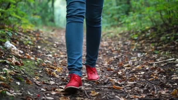 Frauenfüße in roten Turnschuhen spazieren durch den herbstlichen Wald, in der Natur über einen mit trockenem Laub bedeckten Boden.