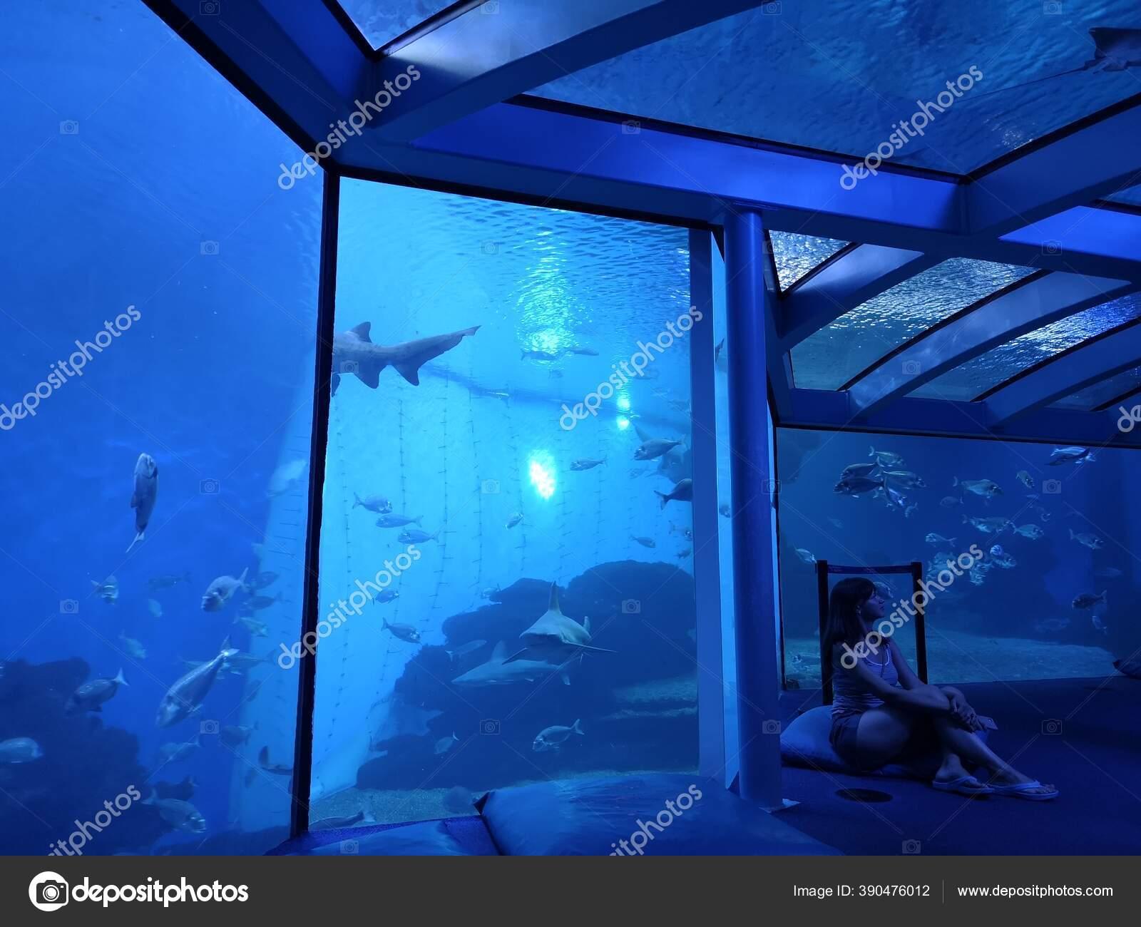 Siluet Wanita Depan Akuarium Besar Foto Biru Tua Dengan Ikan Stok Foto C Freedommaster 390476012