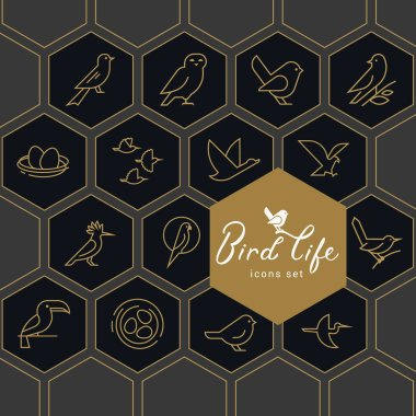 Vector icon set of icons inscribed in honeycombs on the theme of the wild life of birds.