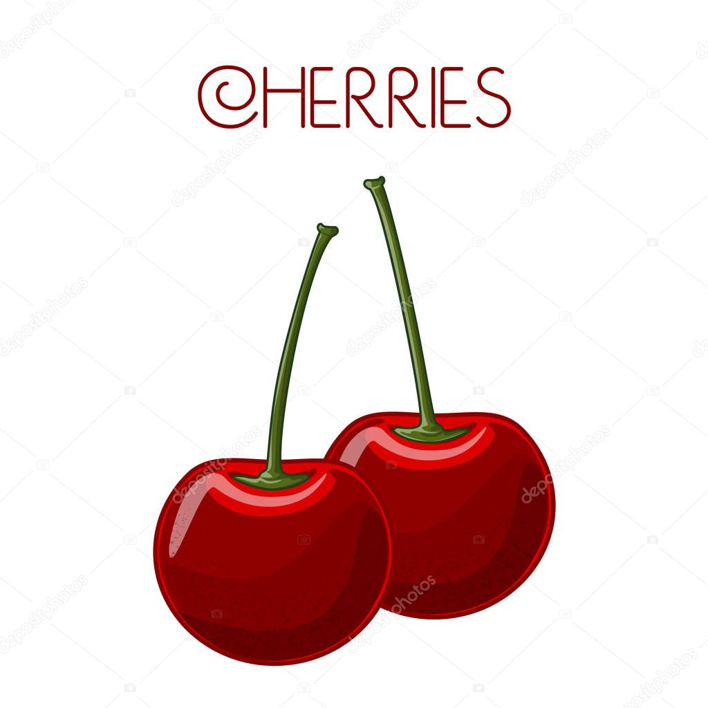 Cherry. Vector image on isolated background