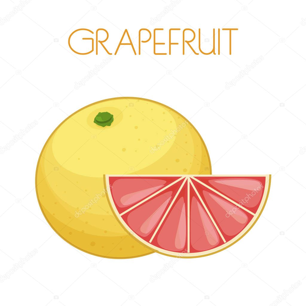 Grapefruit. Vector image on isolated background