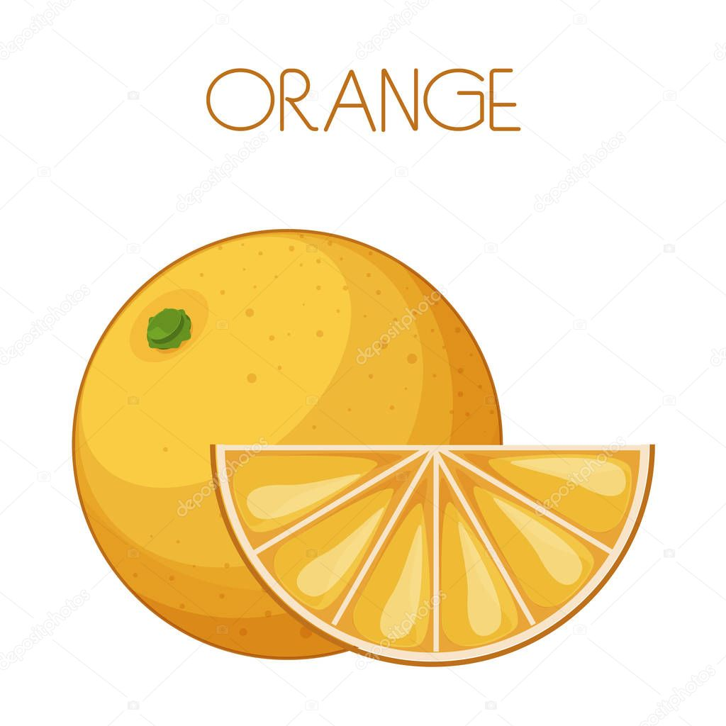 Orange. Vector image on isolated background
