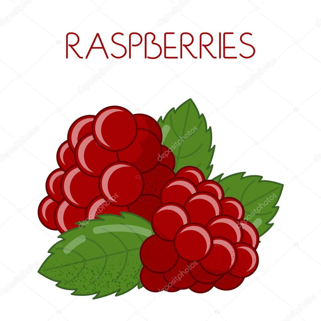 Raspberry. Vector image on isolated background
