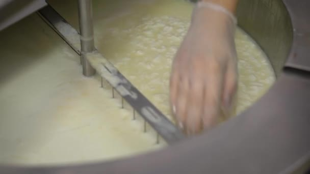 Close up shot of a industrial worker making curd for soft fresh cheese at cheese workshop.
