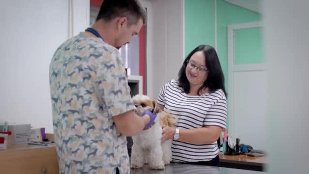žena majitele psa v schůzku s veterinář na klinice, lékař provádí lékařské vyšetření
