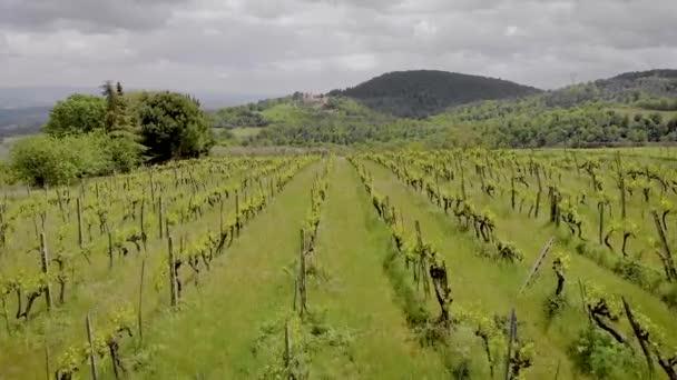 Letecká střela. Krásný italský Toskánsko a jeho vinice. Letní čas pro zrání hroznů.