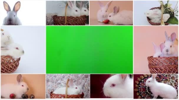 Collage aus Kaninchen, vielen Kaninchen, schönen Kaninchen, Konzept des Osterfestes