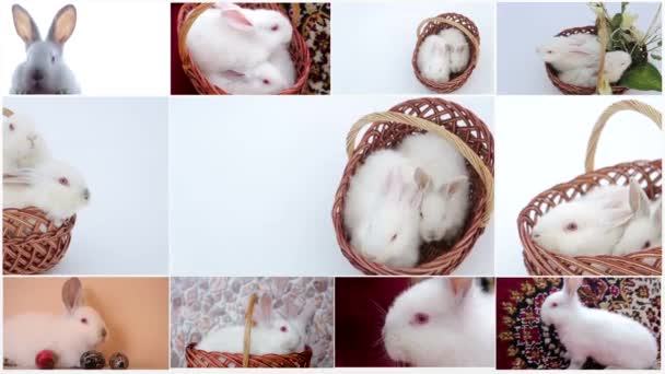 collage of rabbits, many rabbits, beautiful rabbits, concept of the Easter