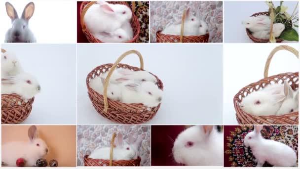 Mnoho králíků
