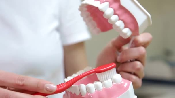 Smiling female dentist explains how to brush your teeth