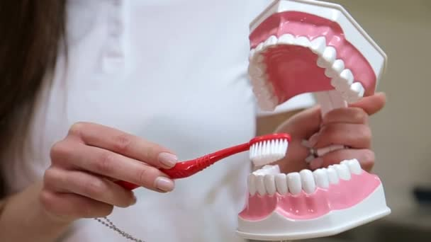 zubní kartáčky, ústní hygiena, ranní nebo večerní čištění dutiny ústní, zdraví zubů, zubní lékař
