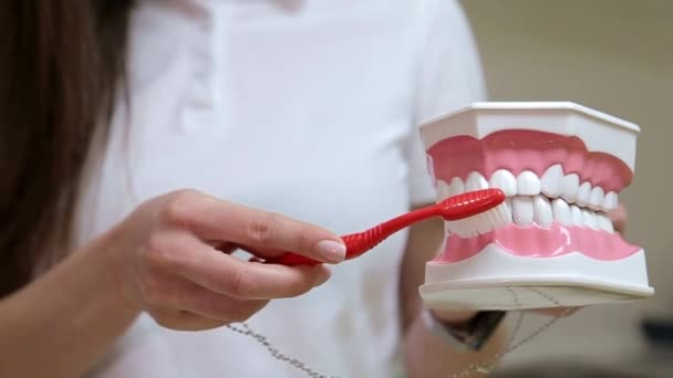 The girl dentist shows how to brush her teeth