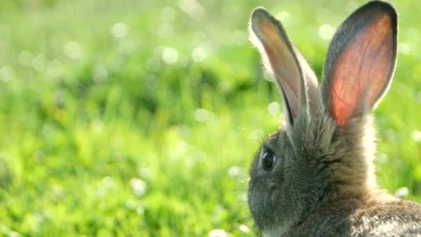 roztomilý šedá zajíc stojící na trávě, série nature