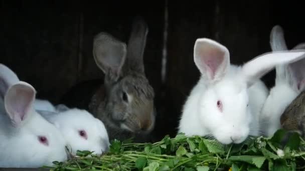 Hausgemachte Kaninchen im Käfig. Familienkaninchen fressen Gras. Der Hase schnüffelt. Haushalt