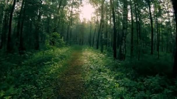 Tmavě zelená smíšený les. Procházka po lesní cestě