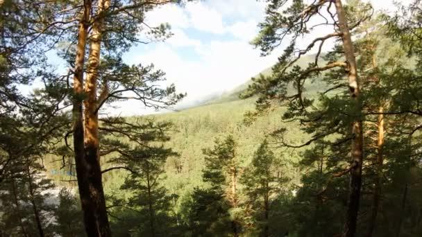 Drone flies between the trees