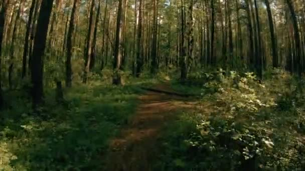 entlang des Waldweges. pov steadicam schuss