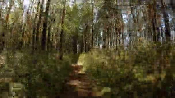 POV. Nagyon gyors mozgás egy erdei ösvényen