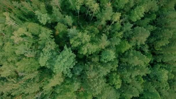 Aerial drone shot over the forest. Drone rise up. 4K