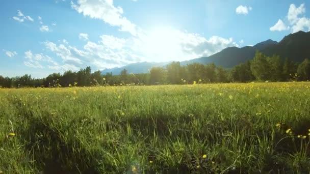 A napfényes nap mezőjében sárga vadvirágok
