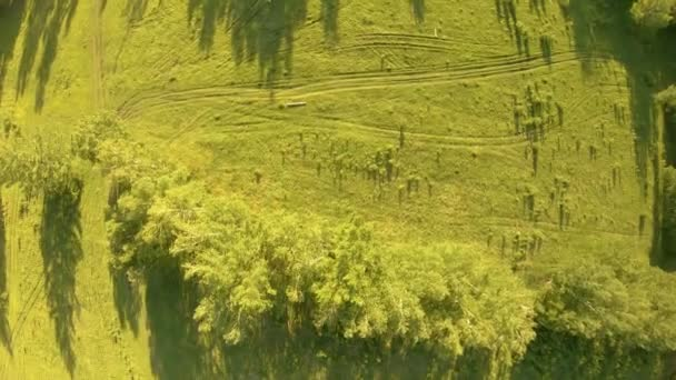 Vertical aerial view of green field and trees at sunset