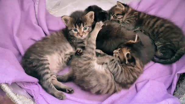 New born baby kittens resting together in a cat basket