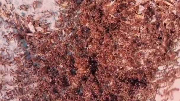 Mravenčí kolonie na ulici