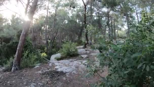 Steady Cam Shot of Hiker Walking on a Path in the Forest. 4k Resolution.